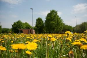 Концертную программу для жителей ЮАО проведут 12 июня в парке «Садовники»