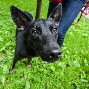 Собака из приюта в районе Бирюлево