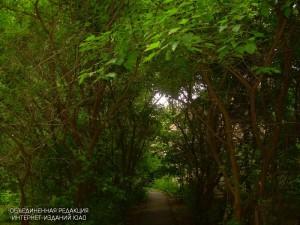 В районе Бирюлево Восточное пройдет озеленение