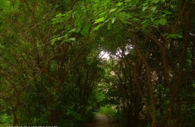 Озеленение в районе Бирюлево Восточное