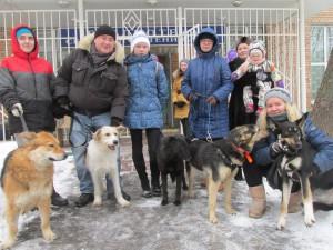 Собаки приюта Бирюлево
