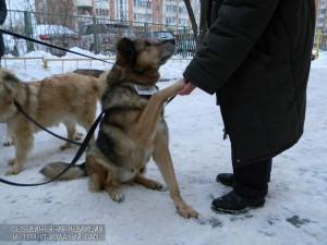 Приют для животных «Бирюлево» принял участие в благотворительной акции