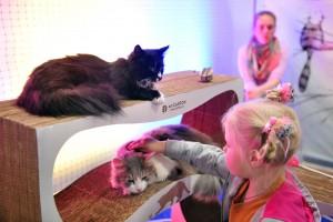Кошек приюта «Бирюлево» покажут на выставке