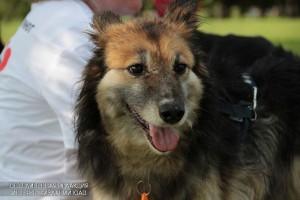 Познакомиться с собаками приюта «Бирюлево» жители района могут 2 апреля