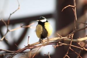 В Бирюлевском дендропарке появятся 19 новых птиц