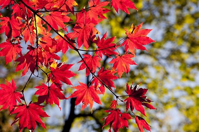 дерево, осень
