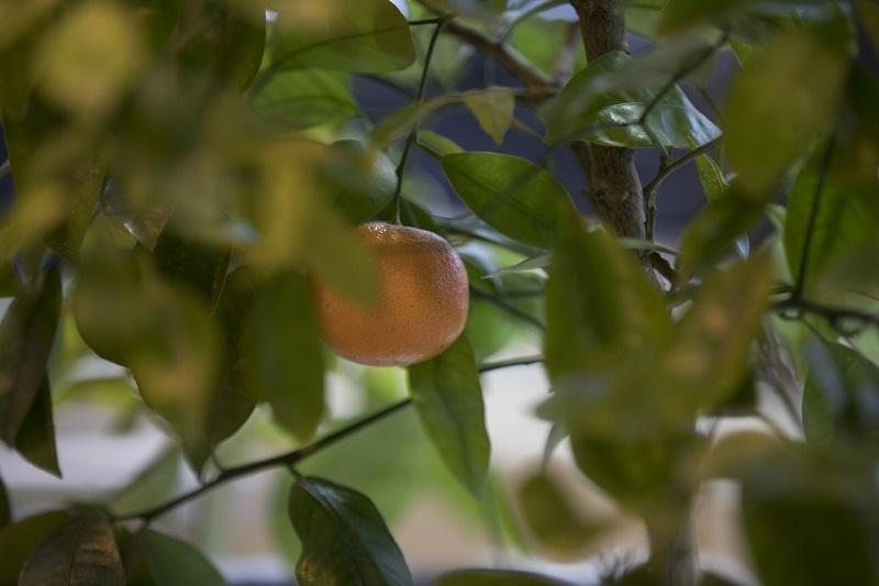 В Первом оранжерейном корпусе