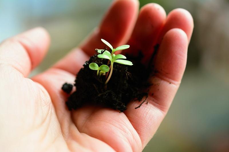 рассада, растение, садоводство, пиксибей, 1303