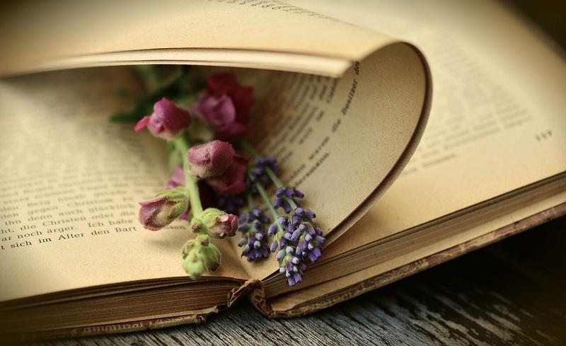 книга, цветы, пиксибей, 1406