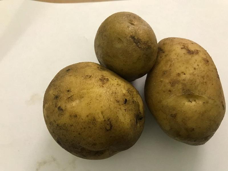 Картошка, Институт садоводства, Миронова, картофель, Колобок, 2910 (1)