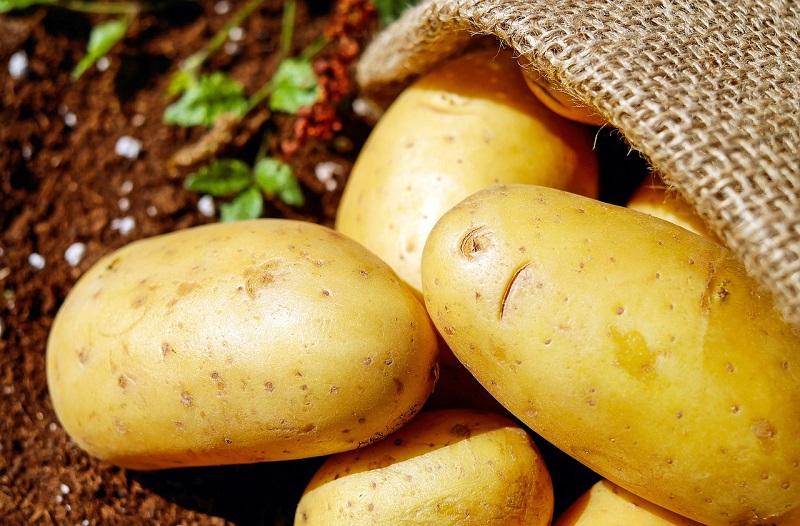 картофель, пиксибей, 0210